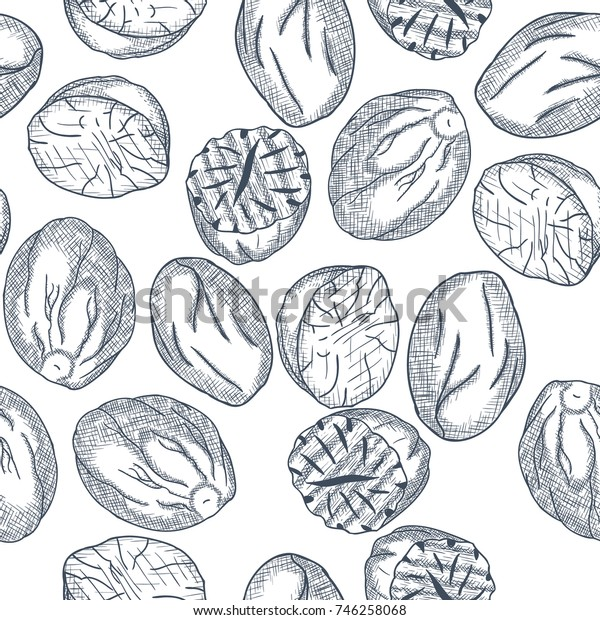 Hand Drawn Nutmeg Seamless Pattern Engrave Sketch. Vector illustration