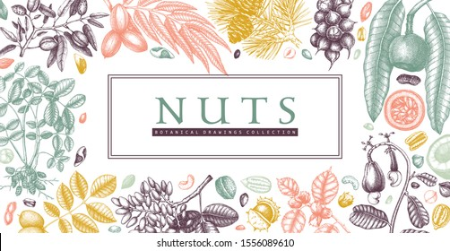 Hand drawn nuts banner design. Vegetarian products background. Detailed culinary nuts sketches frame. Healthy food vector template with botanical elements, trees, branches, plants, fruits, nutshells.
