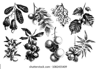 Hand drawn nuts on branches collection. Vector illustration