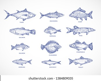 Hand Drawn Ocean, Sea, River and Lake Fishes Set. A Collection of Salmon and Tuna or Pike and Anchovy, Herring, Trout, Mackerel and Dorado Sketches Silhouettes. Isolated Illustrations.