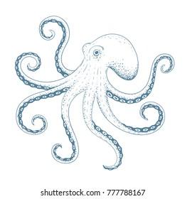 Hand drawn octopus. Vector illustration.