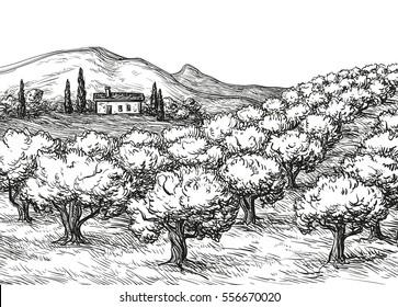 Hand drawn olive grove landscape. Vintage style vector illustration.