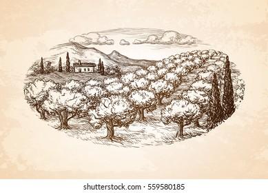 Hand drawn olive grove landscape on old paper background. Vintage style vector illustration.