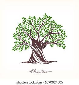 Hand drawn olive tree. Vector sketch illustration