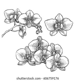 Hand drawn orchid.