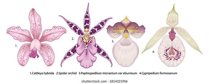 Hand drawn orchid flowers illustration isolated on a white background.
