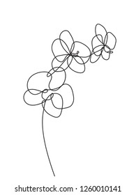 Hand drawn orchid flowers. One line drawing. Minimalist art.