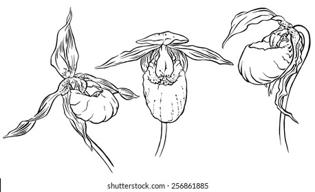 Hand Drawn Orchids, Flower Line Sketch, Vector Illustration.