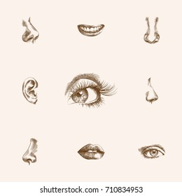 Hand Drawn Organs Sketches Set. Collection Of Mouth, Sniff, Eyeball And Other Sketch Elements.