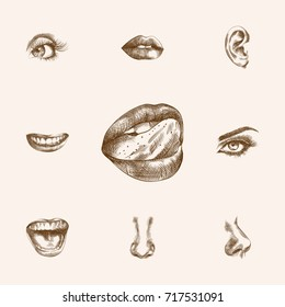 Hand Drawn Organs Sketches Set. Collection Of Eyeball, Smell, Listen And Other Sketch Elements.