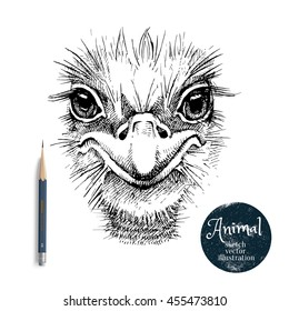 Hand drawn ostrich bird head vector illustration.