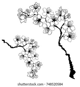 Hand drawn and outline Cherry branches with flowers, sakura vector illustration