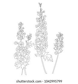Hand drawn outline delphinium flower to fill color in on white background