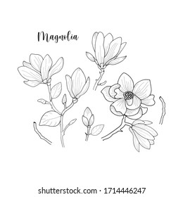 hand drawn outline floral element of  magnolia flower with leave isolated on white in vector