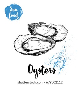 Hand drawn oysters composition. Seafood sketch style illustration. Fresh marine mollusks in opened shells.