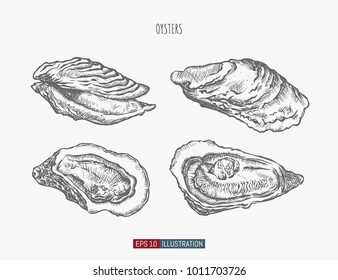 Hand drawn oysters set. Engraved style vector illustration. Template for your design works.