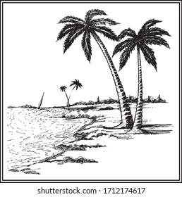 Hand Drawn Palm Tree Vector Scene