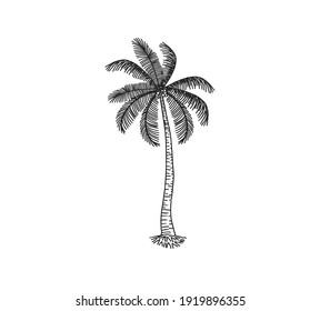 Hand drawn of palm tree vector illustrations