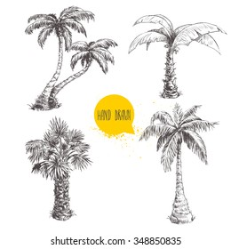 Hand drawn palm trees sketch set. Vector illustration on white background. Travel and vacation symbols.