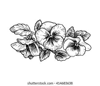 Black and white pansies images stock photos vectors shutterstock hand drawn pansy flowers vector illustration vintage style mightylinksfo