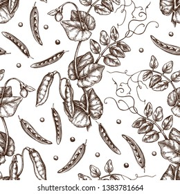 Hand drawn Pea background. Agricultural legumes plant drawing with beans, leaves and flowers. Vegan and healthy food. Botanical seamless pattern. Lineart. Vector pea outlines.