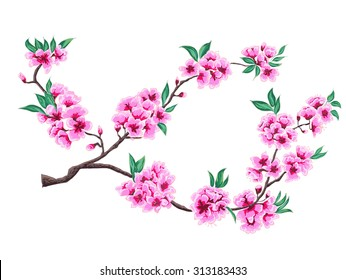 hand drawn peach blossom vector