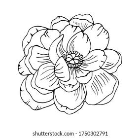 Hand drawn peony flower outline vector floral illustration. Botanical ink pen drawing for modern decor, cards, logo.