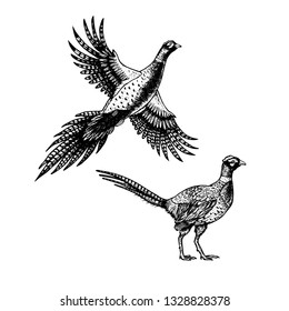 Hand drawn pheasant. Skethes of birds. Flying and standing ibises. Vintage set. Vector retro illustration.