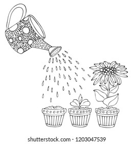 Hand drawn picture showing how the plant grows gradually. Vector gardening illustration, step to grow flowers, plant growth sequence. Sketch for anti stress adult coloring page.