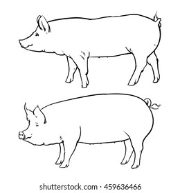 Hand drawn pig isolated on white background. Drawing Vector illustration outline.