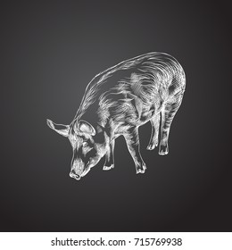Hand Drawn Pig Sketch Symbol. Vector Swine Element In Trendy Style.