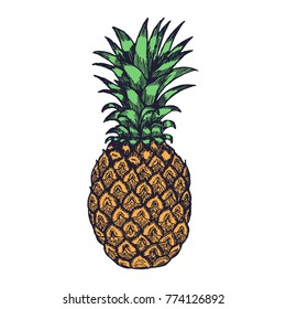 Hand Drawn Pineapple Fruit Engrave Sketch on White Background. Vector illustration