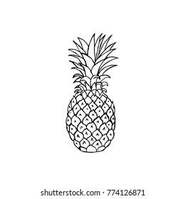 Hand Drawn Pineapple Fruit in White Background. Vector illustration