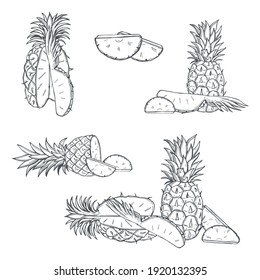 Hand drawn pineapple on white background.Vector sketch  illustration.
