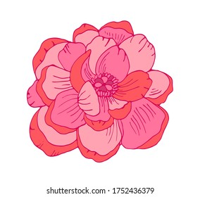 Hand drawn pink peony flower, floral vector illustration. Botanical drawing for modern decor, cards, logo.