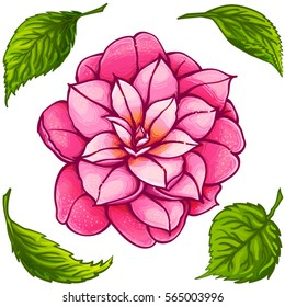 Hand drawn pink Rose Camellia Flower with green leaves isolated on white background. Vector  Botanical illustration. Beautiful exotic flower.