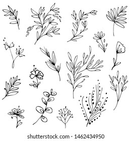 Hand drawn plants, tree branches,herbs, floral elements, blooms. Black and white botanical illustration. Doodled graphic design elements. Vector image.