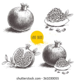 Hand drawn pomegranates set. Pomegranates with seeds and leafs. Sketch style vector illustration. Organic food vector.