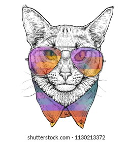 Hand drawn portrait of Abyssinian Cat in glasses. Vector illustration isolated on white