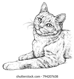 Hand drawn portrait of cute Cat. Vector illustration isolated on white