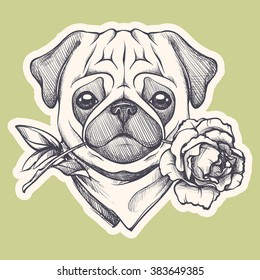 Hand drawn portrait of dog in the neck scarf and with a rose. Vector animal illustration. Pug gentleman