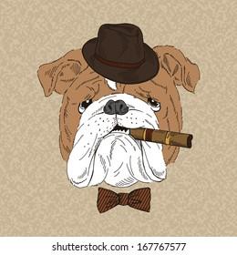 Hand Drawn Portrait of English Bulldog with cigar