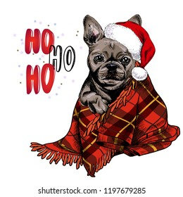 Hand drawn portrait of french bulldog dog wearing santa hat and plaid blanket. Vector Christmas poster. Xmas greeting card. Winter seasonal celebration. Colored new year pet portrait.