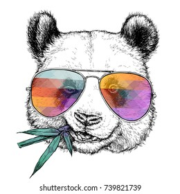 Hand drawn portrait of Funny Panda in glasses with bamboo branch. Vector illustration isolated on white