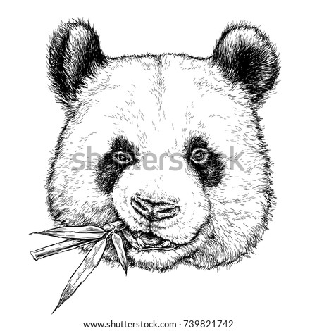 f63e7595430 Hand drawn portrait of Funny Panda with bamboo branch. Vector illustration  isolated on white