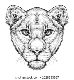 Hand drawn portrait of Lioness. Vector illustration isolated on white
