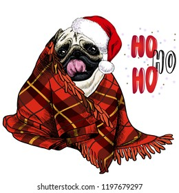 cb382d15f92 Hand drawn portrait of pug dog wearing santa hat and plaid blanket. Vector  Christmas poster