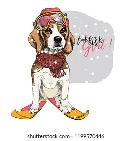 Hand drawn portrait of skiing beagle dog wearing hat, goggles and scarf. Vector Christmas illustration. Colored puppy. Xmas, New Year. Greeting card, party flyer, invitation banner. Winter holiday.