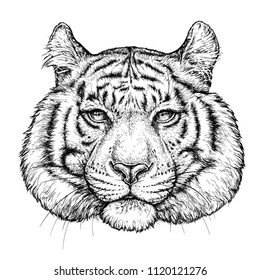 Hand drawn portrait of Tiger. Vector illustration isolated on white