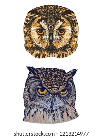 Hand drawn portrait of two owls, isolated on white, vector illustration